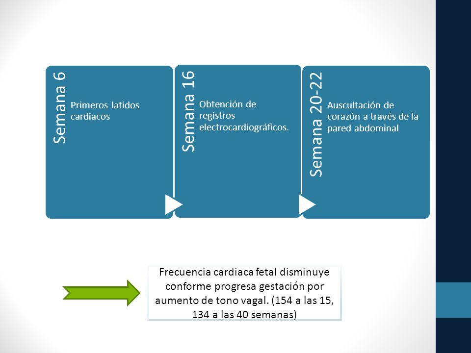Semana 6 Primeros latidos cardiacos Semana 16 Obtención de registros electrocardiográficos.
