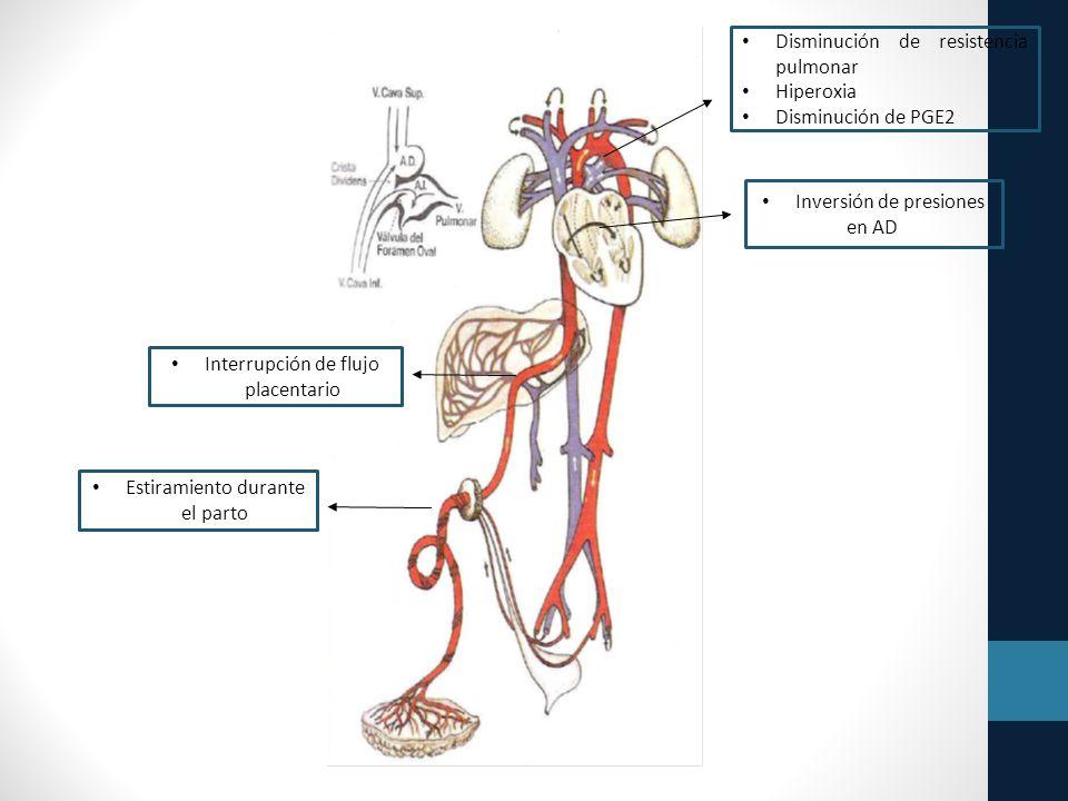 Disminución de resistencia pulmonar Hiperoxia Disminución de PGE2 Inversión de presiones en AD y AI Estiramiento durante el parto Interrupción de flujo placentario