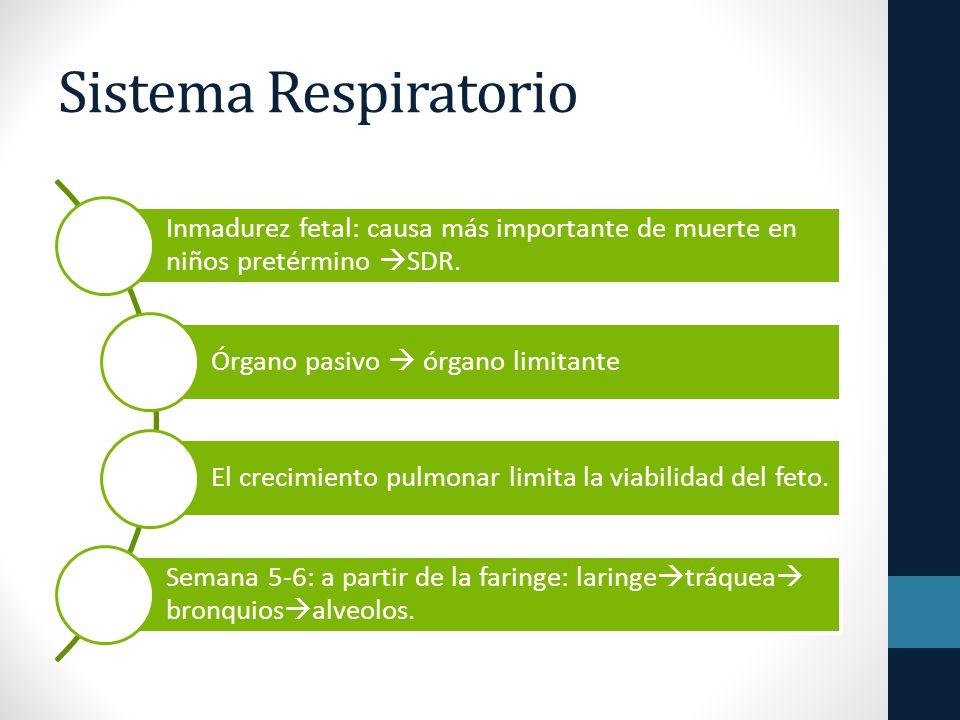 Sistema Respiratorio Inmadurez fetal: causa más importante de muerte en niños pretérmino SDR.