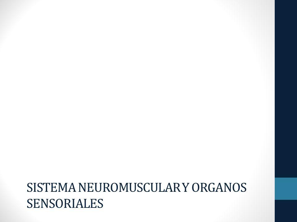 SISTEMA NEUROMUSCULAR Y ORGANOS SENSORIALES