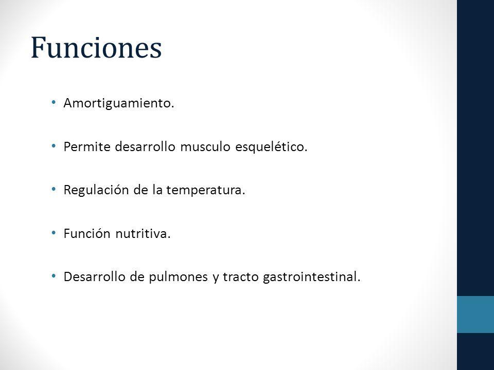 Funciones Amortiguamiento.Permite desarrollo musculo esquelético.
