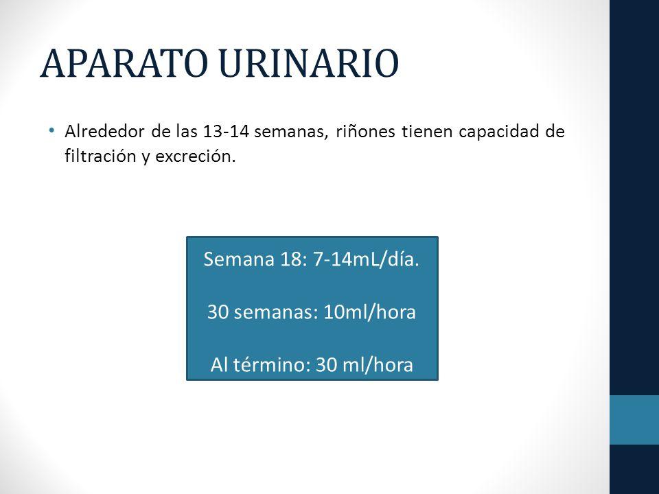 APARATO URINARIO Alrededor de las 13-14 semanas, riñones tienen capacidad de filtración y excreción.