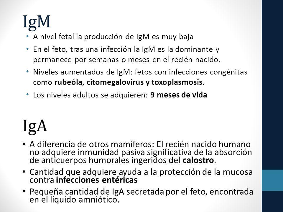 IgM A nivel fetal la producción de IgM es muy baja En el feto, tras una infección la IgM es la dominante y permanece por semanas o meses en el recién nacido.
