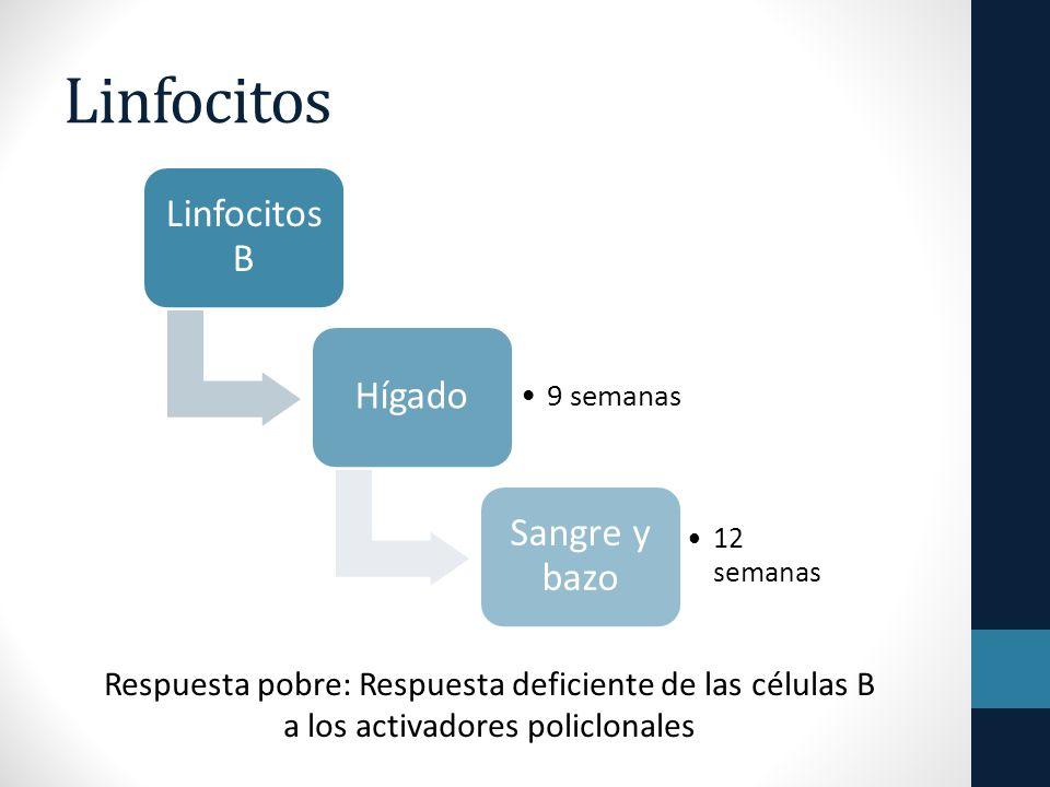 Linfocitos Linfocitos B Hígado 9 semanas Sangre y bazo 12 semanas Respuesta pobre: Respuesta deficiente de las células B a los activadores policlonales