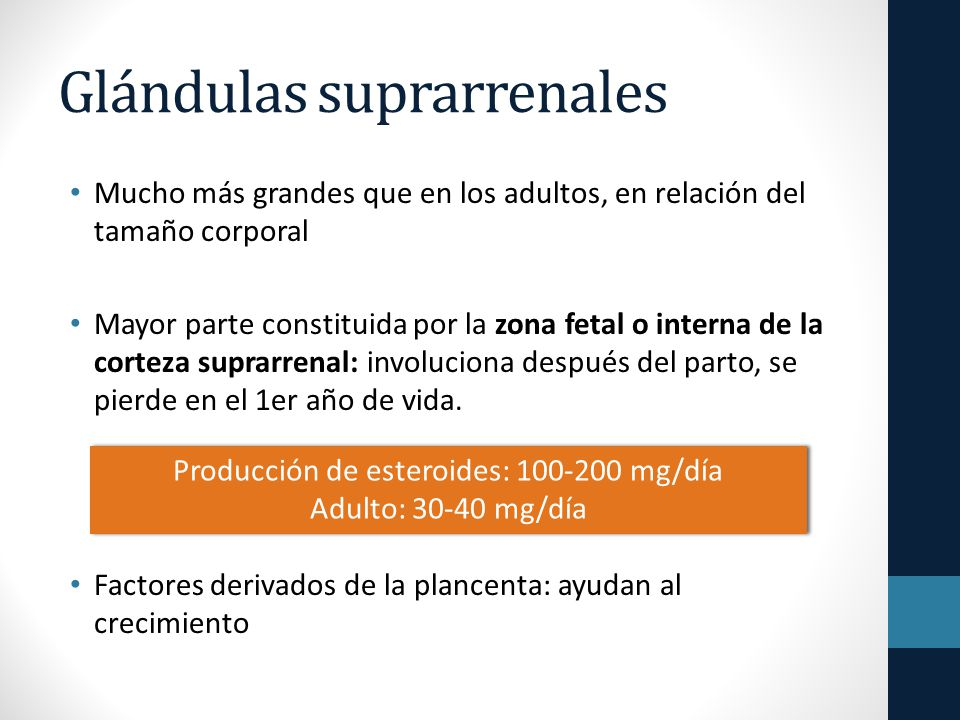 Glándulas suprarrenales Mucho más grandes que en los adultos, en relación del tamaño corporal Mayor parte constituida por la zona fetal o interna de la corteza suprarrenal: involuciona después del parto, se pierde en el 1er año de vida.