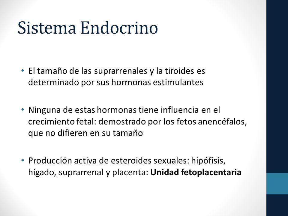 Sistema Endocrino El tamaño de las suprarrenales y la tiroides es determinado por sus hormonas estimulantes Ninguna de estas hormonas tiene influencia en el crecimiento fetal: demostrado por los fetos anencéfalos, que no difieren en su tamaño Producción activa de esteroides sexuales: hipófisis, hígado, suprarrenal y placenta: Unidad fetoplacentaria