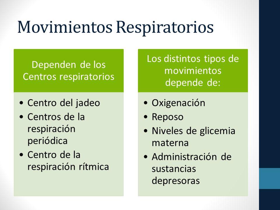 Movimientos Respiratorios Dependen de los Centros respiratorios Centro del jadeo Centros de la respiración periódica Centro de la respiración rítmica Los distintos tipos de movimientos depende de: Oxigenación Reposo Niveles de glicemia materna Administración de sustancias depresoras