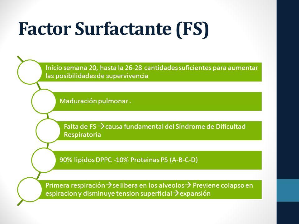 Factor Surfactante (FS) Inicio semana 20, hasta la 26-28 cantidades suficientes para aumentar las posibilidades de supervivencia Maduración pulmonar.
