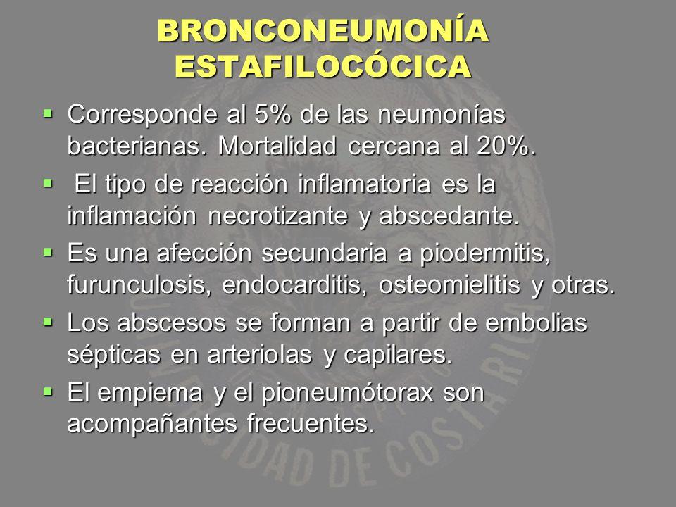 BRONCONEUMONÍA ESTAFILOCÓCICA Corresponde al 5% de las neumonías bacterianas. Mortalidad cercana al 20%. Corresponde al 5% de las neumonías bacteriana