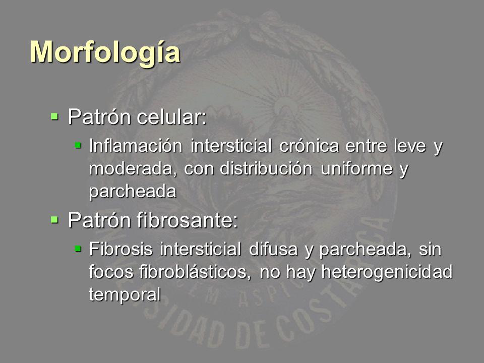 Morfología Patrón celular: Patrón celular: Inflamación intersticial crónica entre leve y moderada, con distribución uniforme y parcheada Inflamación i