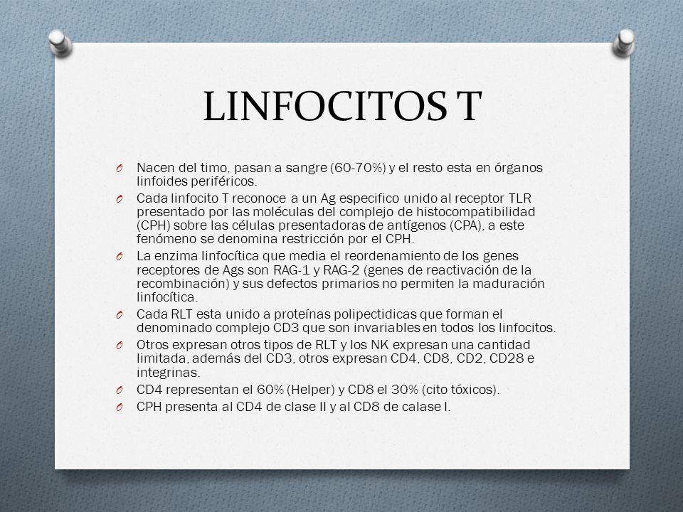 LINFOCITOS T O Nacen del timo, pasan a sangre (60-70%) y el resto esta en órganos linfoides periféricos. O Cada linfocito T reconoce a un Ag especific