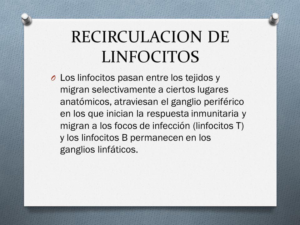 RECIRCULACION DE LINFOCITOS O Los linfocitos pasan entre los tejidos y migran selectivamente a ciertos lugares anatómicos, atraviesan el ganglio perif