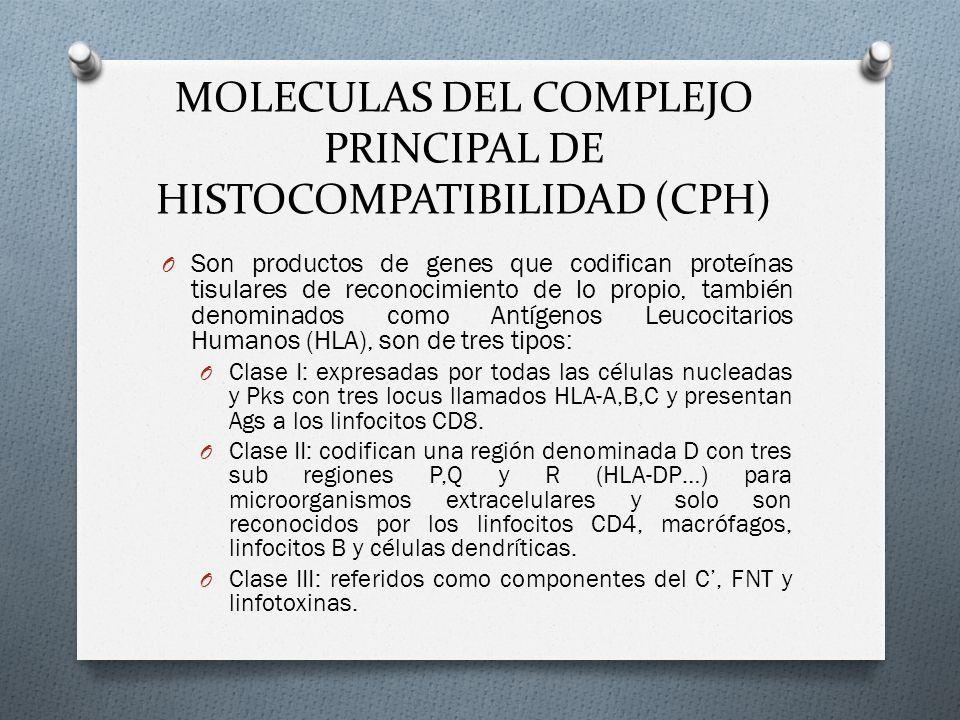 MOLECULAS DEL COMPLEJO PRINCIPAL DE HISTOCOMPATIBILIDAD (CPH) O Son productos de genes que codifican proteínas tisulares de reconocimiento de lo propi