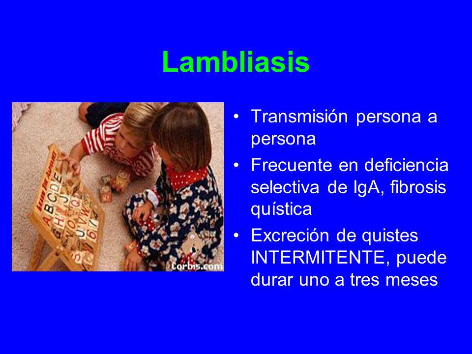 Lambliasis Transmisión persona a persona Frecuente en deficiencia selectiva de IgA, fibrosis quística Excreción de quistes INTERMITENTE, puede durar uno a tres meses
