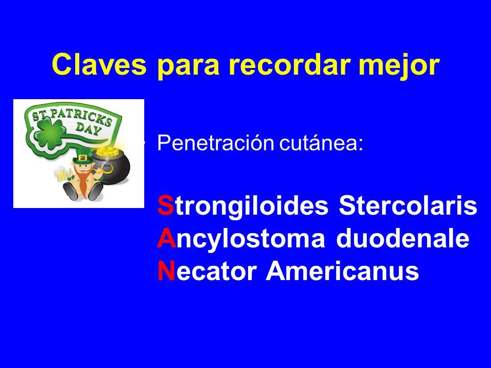 Claves para recordar mejor Penetración cutánea: Strongiloides Stercolaris Ancylostoma duodenale Necator Americanus