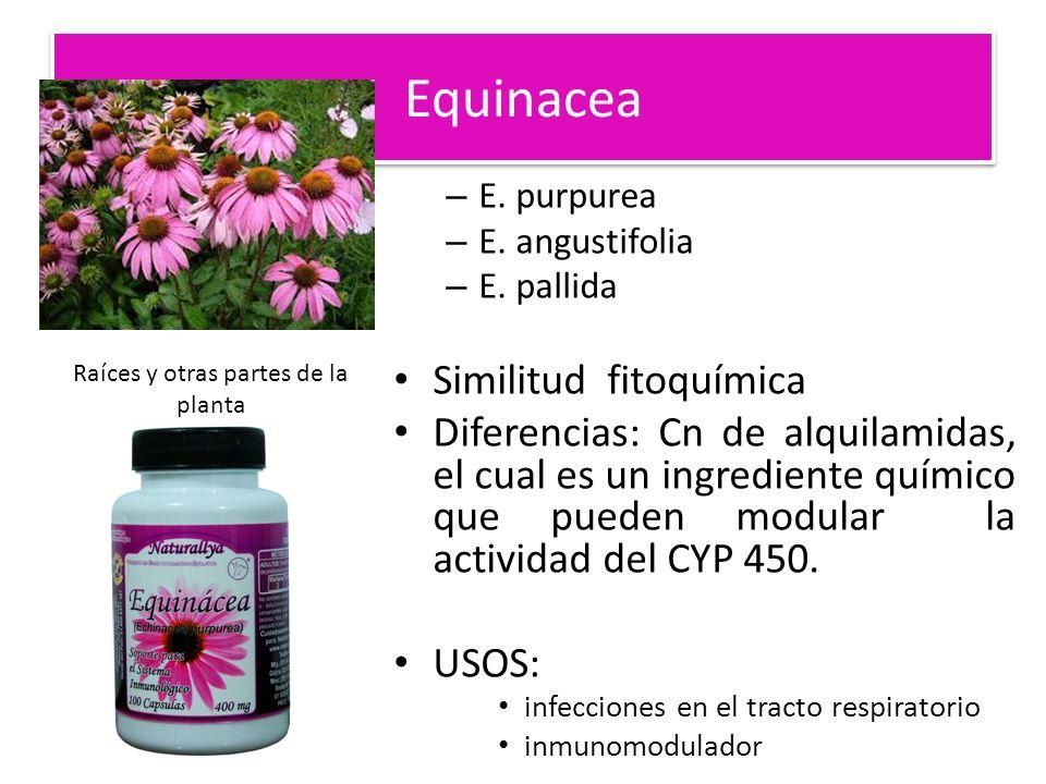 Equinacea – E. purpurea – E. angustifolia – E. pallida Similitud fitoquímica Diferencias: Cn de alquilamidas, el cual es un ingrediente químico que pu