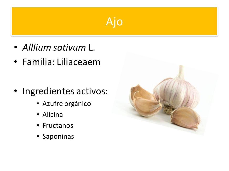 Ajo Alllium sativum L. Familia: Liliaceaem Ingredientes activos: Azufre orgánico Alicina Fructanos Saponinas