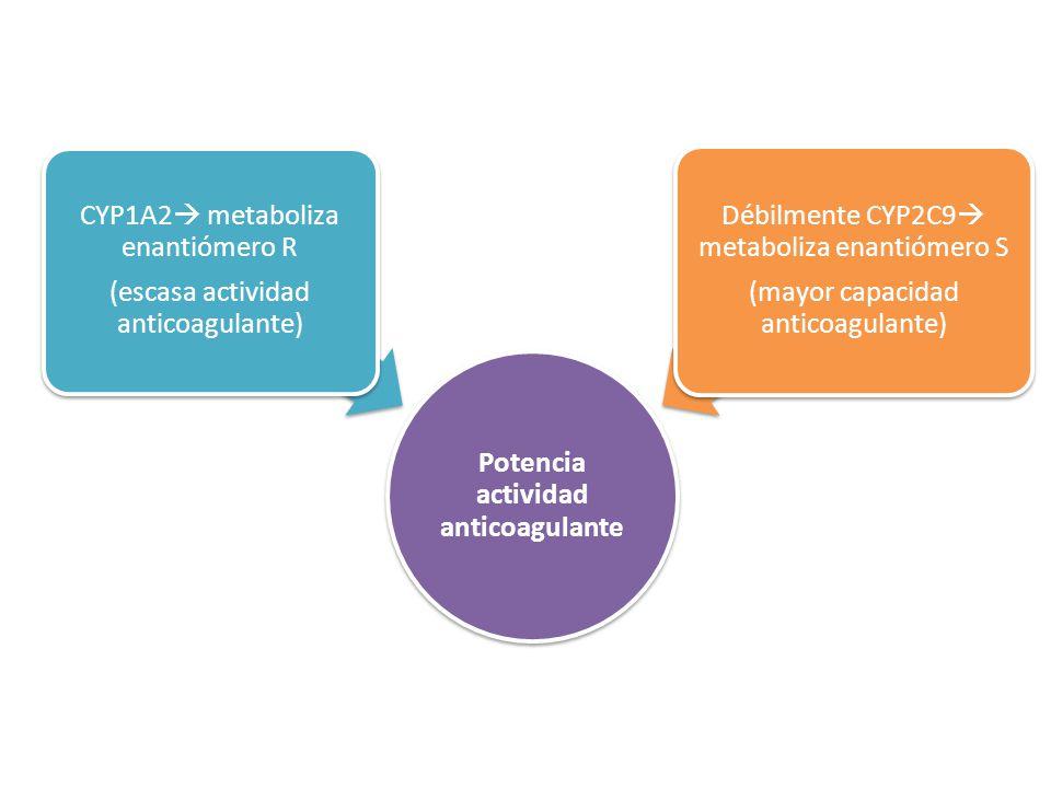 Potencia actividad anticoagulante CYP1A2 metaboliza enantiómero R (escasa actividad anticoagulante) Débilmente CYP2C9 metaboliza enantiómero S (mayor