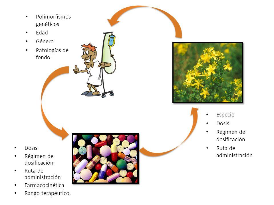 Fármacos que han demostrado inteacciones Sedantes Antineoplásicos Antineoplásicos (irinotecan, imatinib) nmuno- supresores Inmuno- supresores (ciclosporina y tacrólimus) Cardiovasculares Cardiovasculares (digoxina, nifedipina y propanolol) Ant-HIV Ant-HIV (indinavir y saquinavir) Antidepresivos Antidepresivos (midazolam, alprazolam, amitriptilina y trazodona) Anticoagulantes Anticoagulantes (warfarina, aspirina, fenprocoumon)