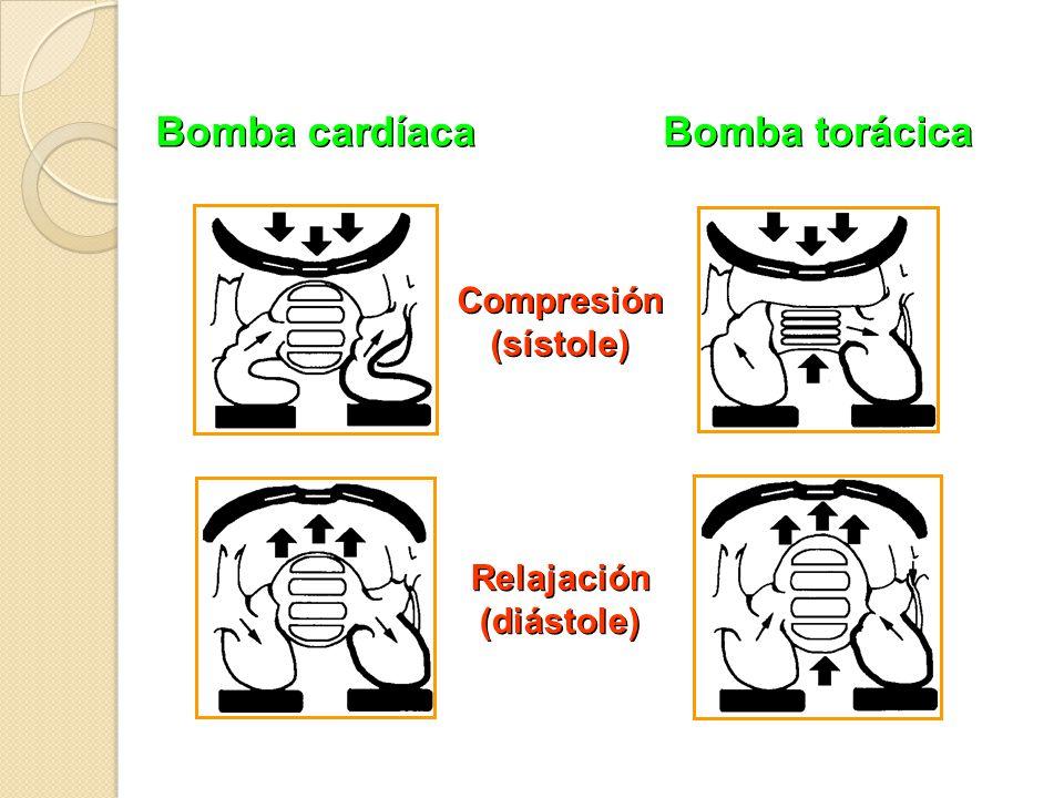 Bomba cardíaca Bomba torácica Compresión (sístole) Compresión (sístole) Relajación (diástole) Relajación (diástole)