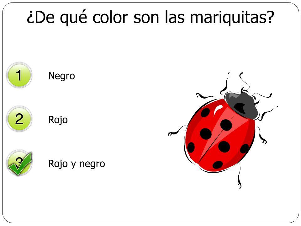 ¿De qué color son las mariquitas? Negro Rojo Rojo y negro