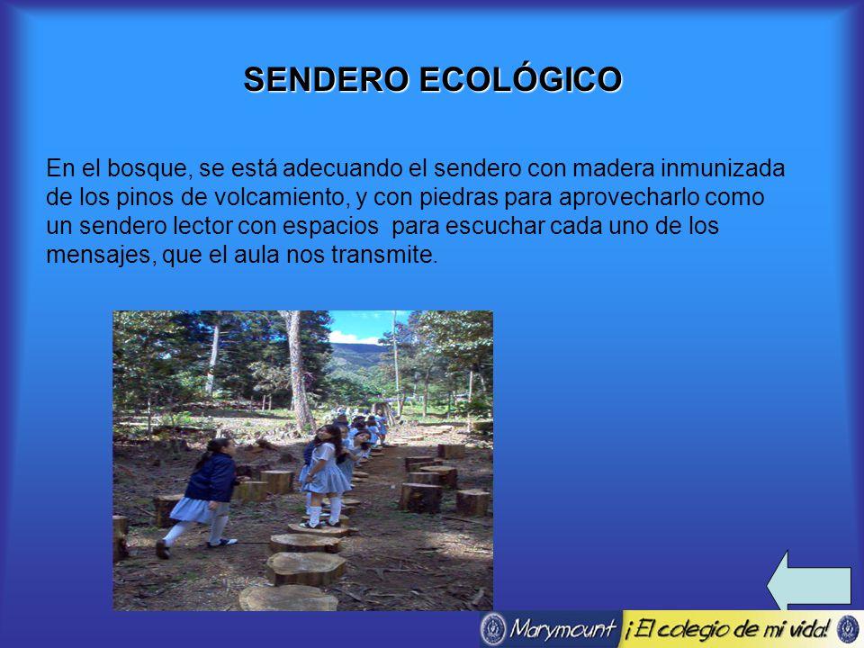 SENDERO ECOLÓGICO En el bosque, se está adecuando el sendero con madera inmunizada de los pinos de volcamiento, y con piedras para aprovecharlo como un sendero lector con espacios para escuchar cada uno de los mensajes, que el aula nos transmite.