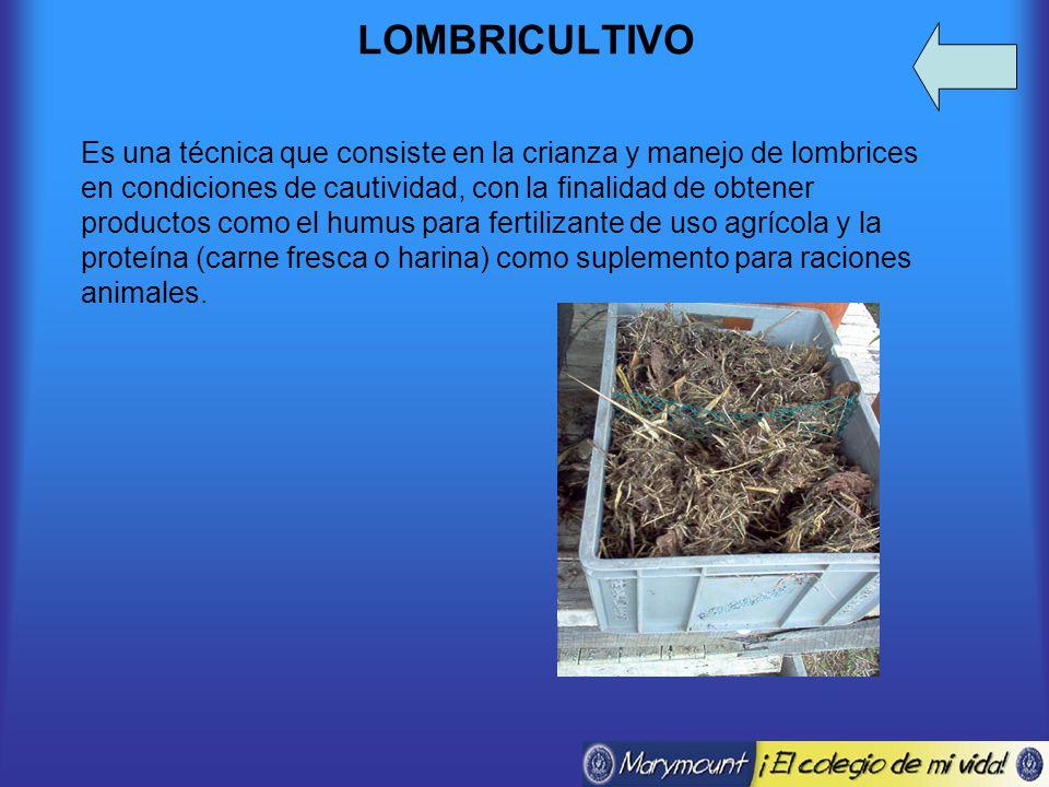 LOMBRICULTIVO Es una técnica que consiste en la crianza y manejo de lombrices en condiciones de cautividad, con la finalidad de obtener productos como el humus para fertilizante de uso agrícola y la proteína (carne fresca o harina) como suplemento para raciones animales.