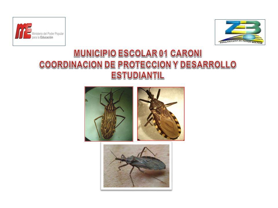 ¿ QUÉ ES EL CHIPO.Es un insecto que se alimenta de sangre de animales y humanos por picaduras.
