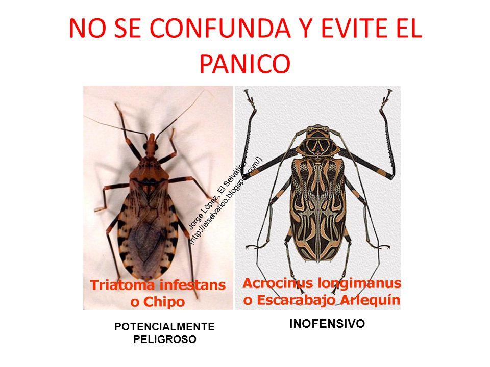 NO SE CONFUNDA Y EVITE EL PANICO INOFENSIVO POTENCIALMENTE PELIGROSO