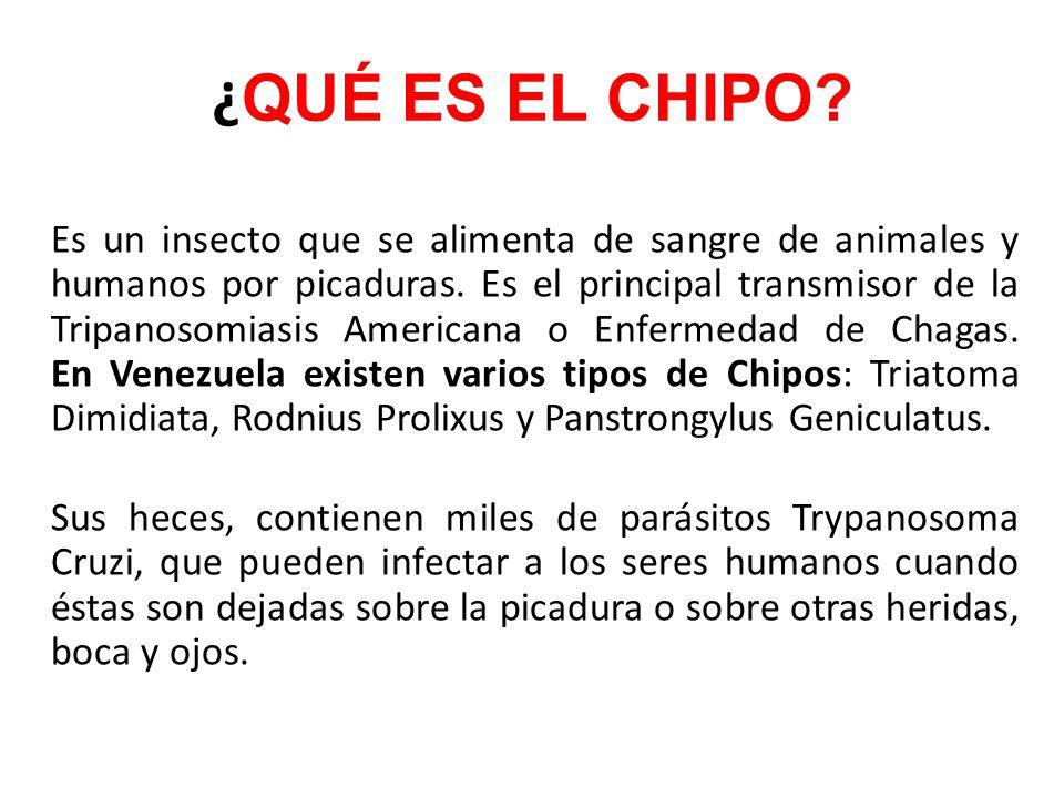 ¿ QUÉ ES EL CHIPO? Es un insecto que se alimenta de sangre de animales y humanos por picaduras. Es el principal transmisor de la Tripanosomiasis Ameri