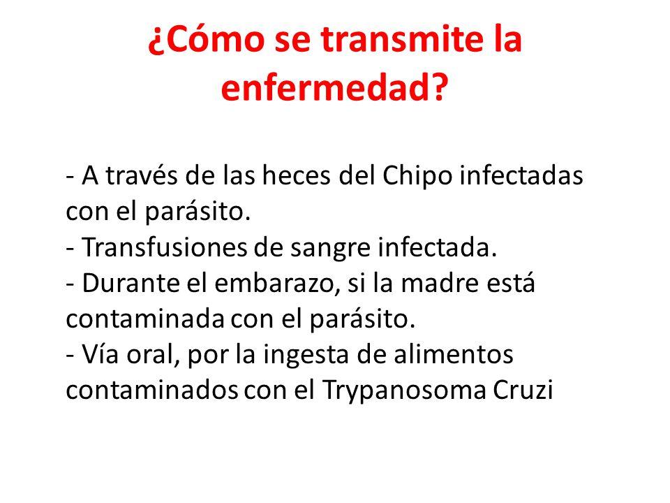 ¿Cómo se transmite la enfermedad? - A través de las heces del Chipo infectadas con el parásito. - Transfusiones de sangre infectada. - Durante el emba