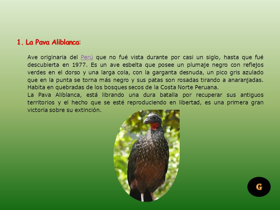 El Perú es el segundo país con mayor número de especies de aves en el mundo y contando sólo especies endémicas, es el primero.