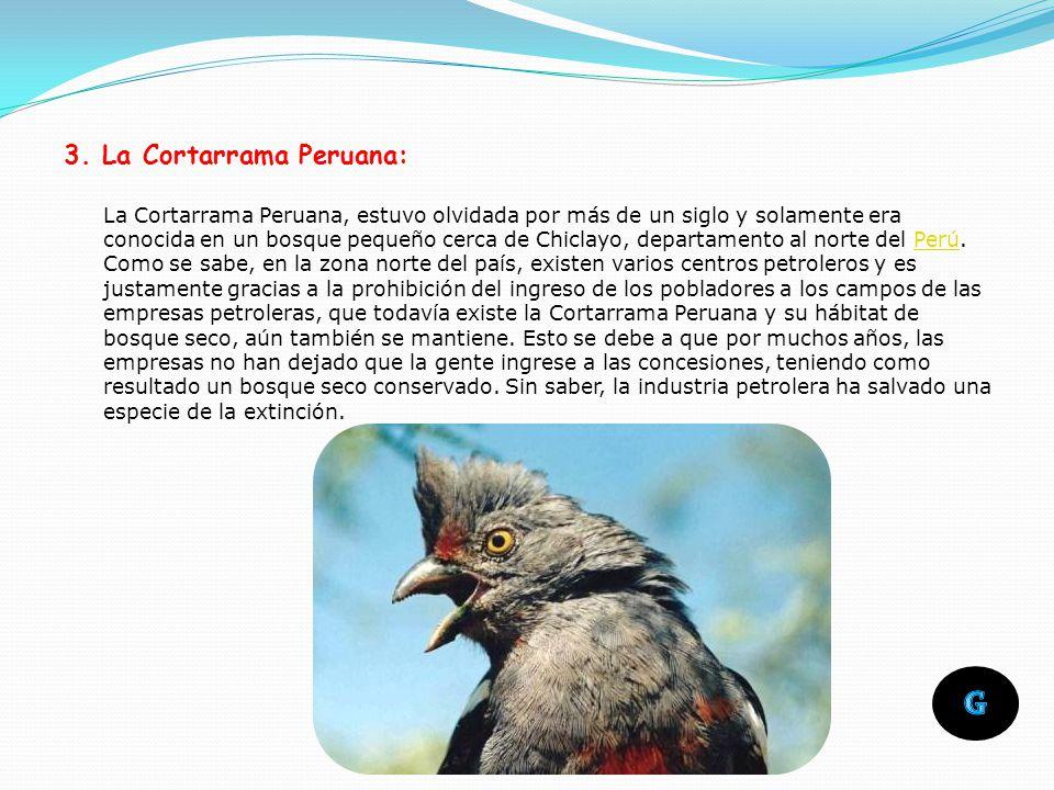 Esta especie es endémica de los Andes de Perú. Cuenta actualmente con menos de 250 especímenes en estado salvaje. Es el huésped emblemático del Parque
