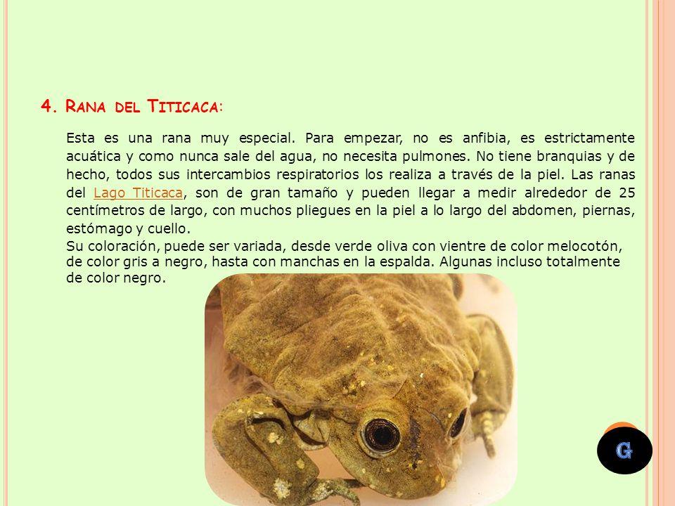 La Cortarrama Peruana, estuvo olvidada por más de un siglo y solamente era conocida en un bosque pequeño cerca de Chiclayo, departamento al norte del