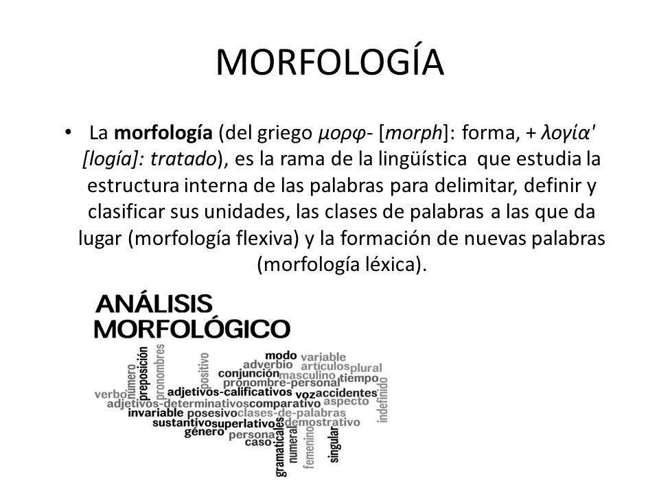 MORFOLOGÍA La morfología (del griego μορφ- [morph]: forma, + λογία [logía]: tratado), es la rama de la lingüística que estudia la estructura interna de las palabras para delimitar, definir y clasificar sus unidades, las clases de palabras a las que da lugar (morfología flexiva) y la formación de nuevas palabras (morfología léxica).