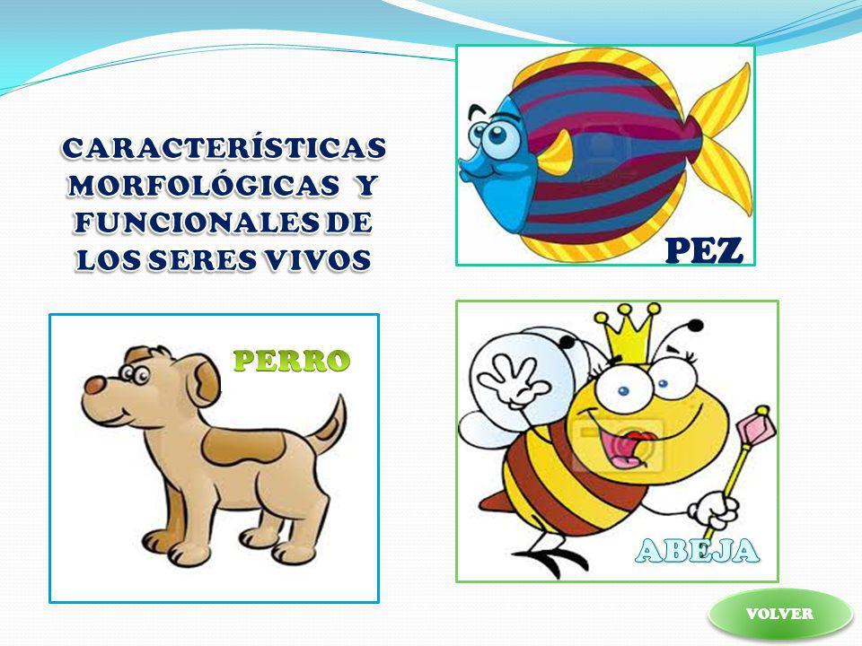 Características morfológicas y funcionales de los seres vivos Características morfológicas y funcionales de los seres vivos ACTIVIDADES