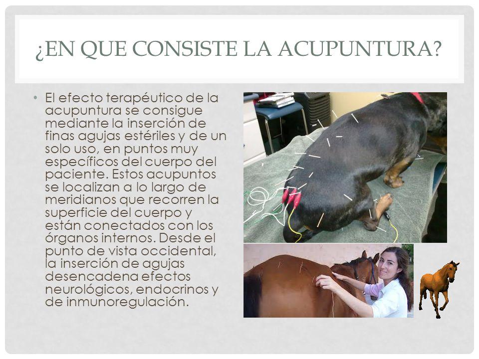 ¿EN QUE CONSISTE LA ACUPUNTURA? El efecto terapéutico de la acupuntura se consigue mediante la inserción de finas agujas estériles y de un solo uso, e