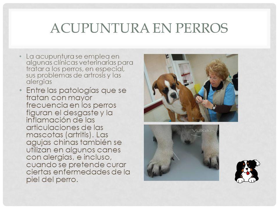 ACUPUNTURA EN PERROS La acupuntura se emplea en algunas clínicas veterinarias para tratar a los perros, en especial, sus problemas de artrosis y las alergias Entre las patologías que se tratan con mayor frecuencia en los perros figuran el desgaste y la inflamación de las articulaciones de las mascotas (artritis).