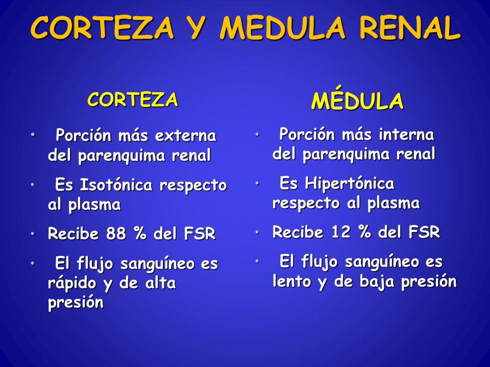 CORTEZA Y MEDULA RENAL CORTEZA Porción más externa del parenquima renal Porción más externa del parenquima renal Es Isotónica respecto al plasma Es Is