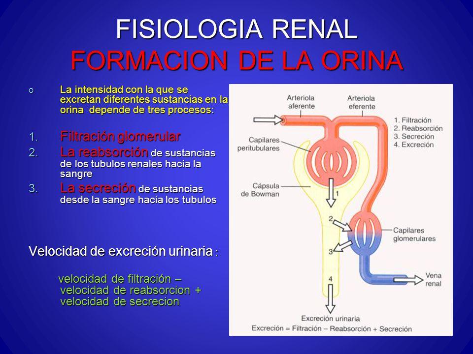 FISIOLOGIA RENAL FORMACION DE LA ORINA o La intensidad con la que se excretan diferentes sustancias en la orina depende de tres procesos: 1. Filtració