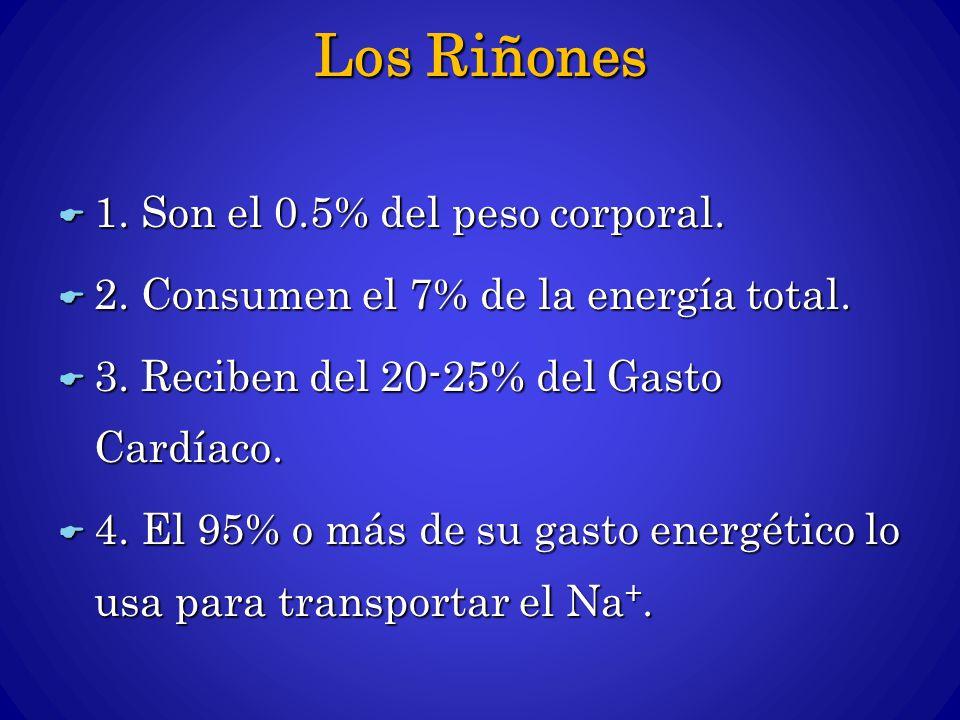 Los Riñones 1. Son el 0.5% del peso corporal. 1. Son el 0.5% del peso corporal. 2. Consumen el 7% de la energía total. 2. Consumen el 7% de la energía