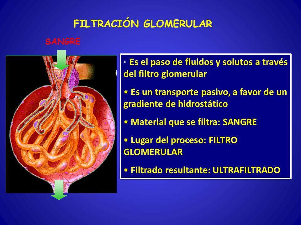 FILTRACIÓN GLOMERULAR Es el paso de fluidos y solutos a través del filtro glomerular Es un transporte pasivo, a favor de un gradiente de hidrostático