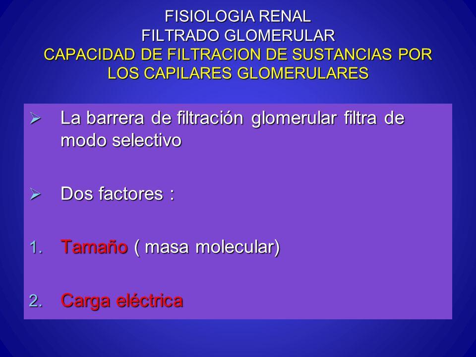FISIOLOGIA RENAL FILTRADO GLOMERULAR CAPACIDAD DE FILTRACION DE SUSTANCIAS POR LOS CAPILARES GLOMERULARES La barrera de filtración glomerular filtra d