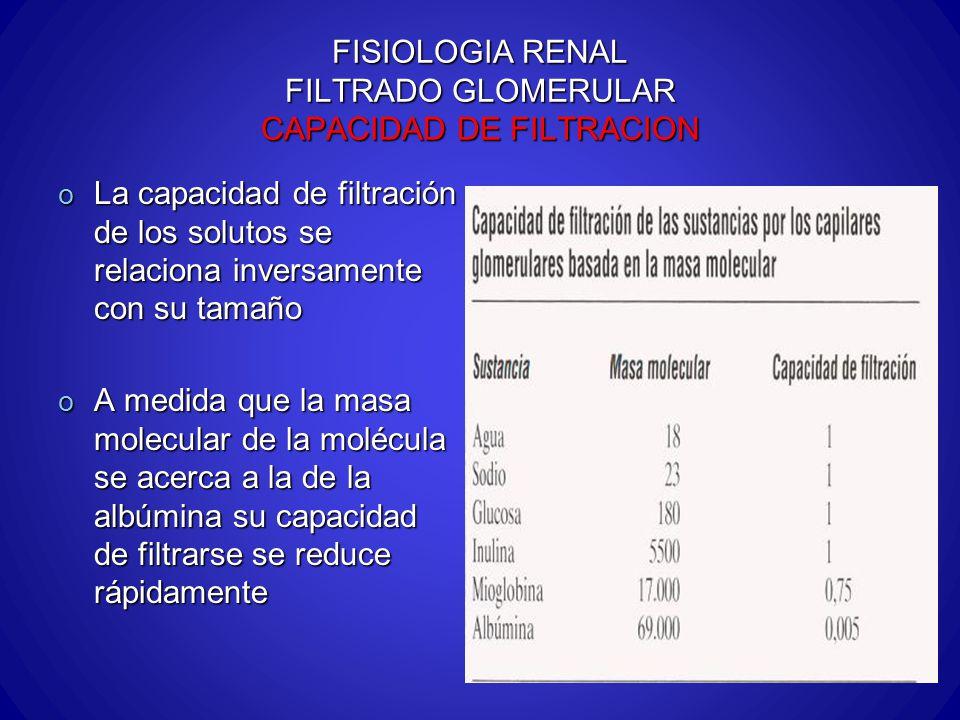 FISIOLOGIA RENAL FILTRADO GLOMERULAR CAPACIDAD DE FILTRACION o La capacidad de filtración de los solutos se relaciona inversamente con su tamaño o A m