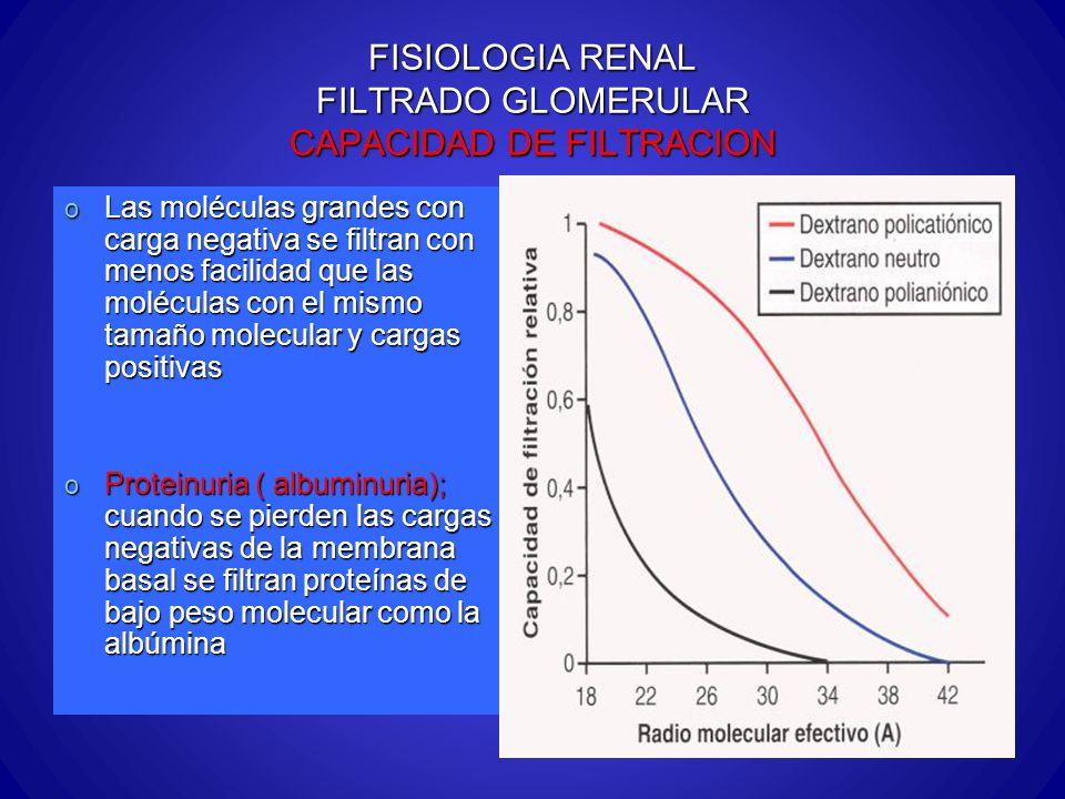 FISIOLOGIA RENAL FILTRADO GLOMERULAR CAPACIDAD DE FILTRACION o Las moléculas grandes con carga negativa se filtran con menos facilidad que las molécul