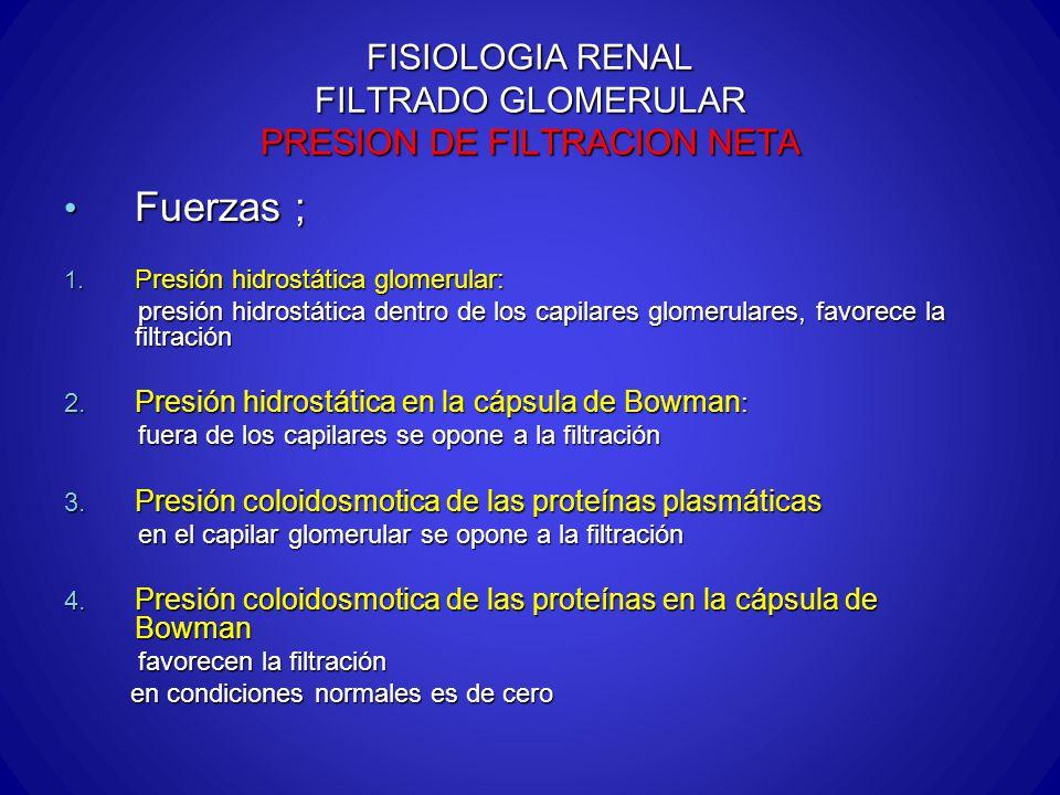 FISIOLOGIA RENAL FILTRADO GLOMERULAR PRESION DE FILTRACION NETA Fuerzas ; Fuerzas ; 1. Presión hidrostática glomerular: presión hidrostática dentro de