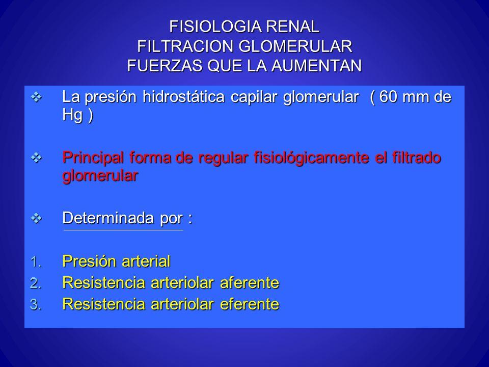 FISIOLOGIA RENAL FILTRACION GLOMERULAR FUERZAS QUE LA AUMENTAN La presión hidrostática capilar glomerular ( 60 mm de Hg ) La presión hidrostática capi