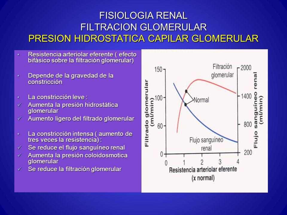 FISIOLOGIA RENAL FILTRACION GLOMERULAR PRESION HIDROSTATICA CAPILAR GLOMERULAR Resistencia arteriolar eferente ( efecto bifásico sobre la filtración g