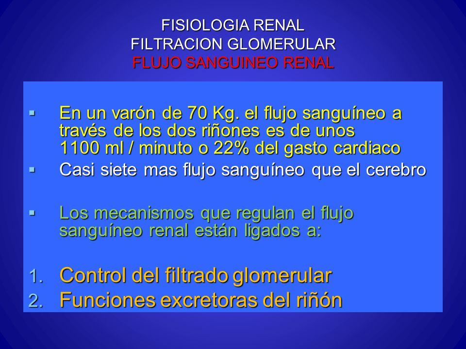 FISIOLOGIA RENAL FILTRACION GLOMERULAR FLUJO SANGUINEO RENAL En un varón de 70 Kg. el flujo sanguíneo a través de los dos riñones es de unos 1100 ml /