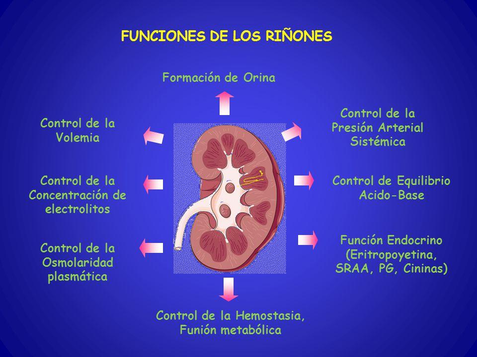 FUNCIONES DE LOS RIÑONES Formación de Orina Control de la Volemia Control de la Presión Arterial Sistémica Control de Equilibrio Acido-Base Control de